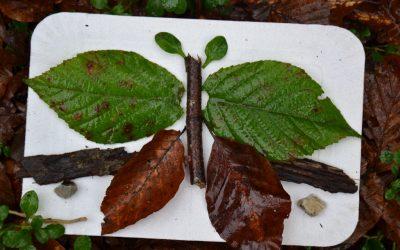 Učenci PP3 v gozdu spoznali simetrijo